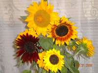 Sunflowers_from_the_russian_farmer